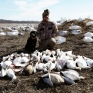 Guided snow goose hunt in Missouri