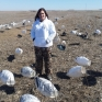 spring snow goose hunting in Missouri