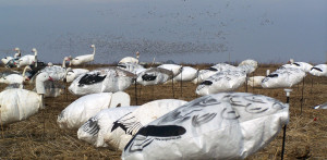 Proper Snow Goose Hunting Gear Can Make or Break Your Next Trip