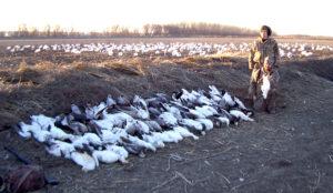 Snow Goose Hunting in Missouri